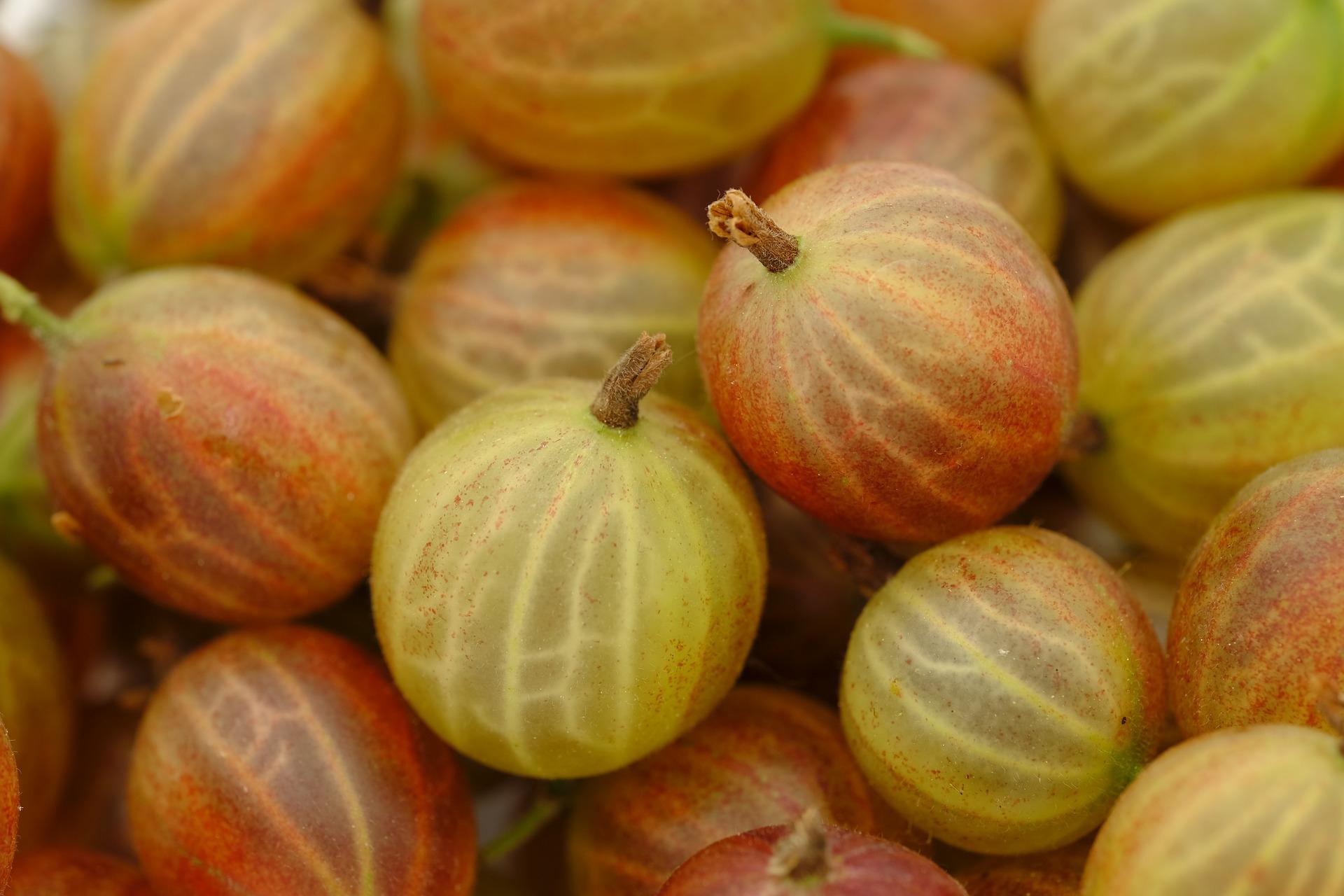 Stachelbeeren / Gooseberries
